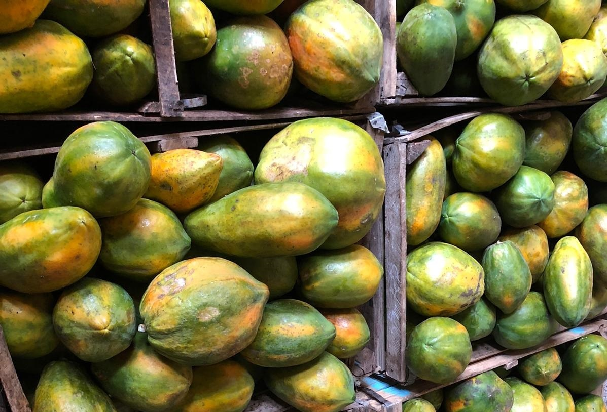 papaya (2) - Copy.jpg